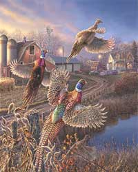 pheasants flushing